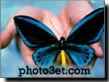 تصویر رویایی از پروانه و دست دعا