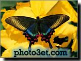پروانه ناز و خوشگل