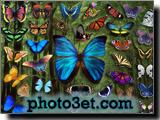 کلکسیون پروانه ها
