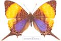 پروانه خوشگل