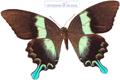 پروانه های خوشگل و ناز و زیبا
