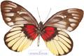 عکس حشرات زیبا - فوتو ست