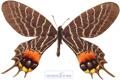 عکس پروانه عجیب