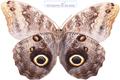 گالری عکس پروانه های زیبا