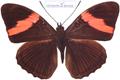 Butterfly butifull