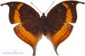 Butterfly best photo gallery