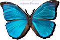blue 0butterfly