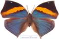 تصاویر پروانه های رنگارنگ