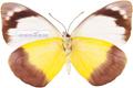 پروانه های خیلی زریف و نازک