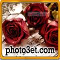 گل عشقولانه