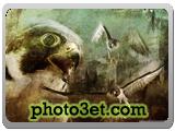 wallpaper falcon