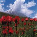 طبیعت بهاری دماوند -طبیعت ایران