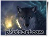 wolf wallpaper گرگ