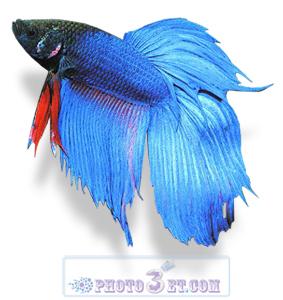 گالری عکس ماهی آکواریوم