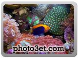 گالری عکس قشنگ ترین ماهی های دنیا