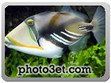 فوتوست - گالری عکس ماهی