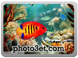 akvariom ziba
