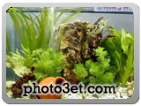 best aquariuom photo gallery