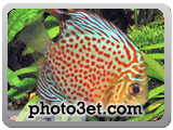 ماهی خال دار زیبا
