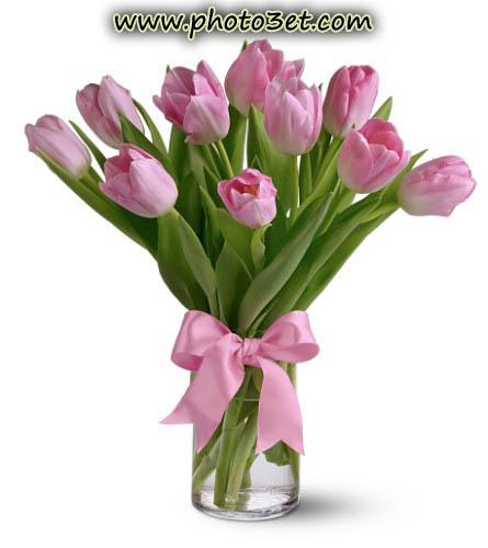 'گالری عکس گل لاله