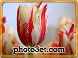 گل های خوشگل ایرانی