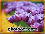 طبیعت زیبای باغ عای گل