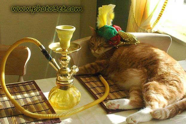گربه و قلیان - حنده بازار و جالب