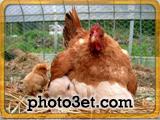 عکس های بامزه جدید از حیوانات