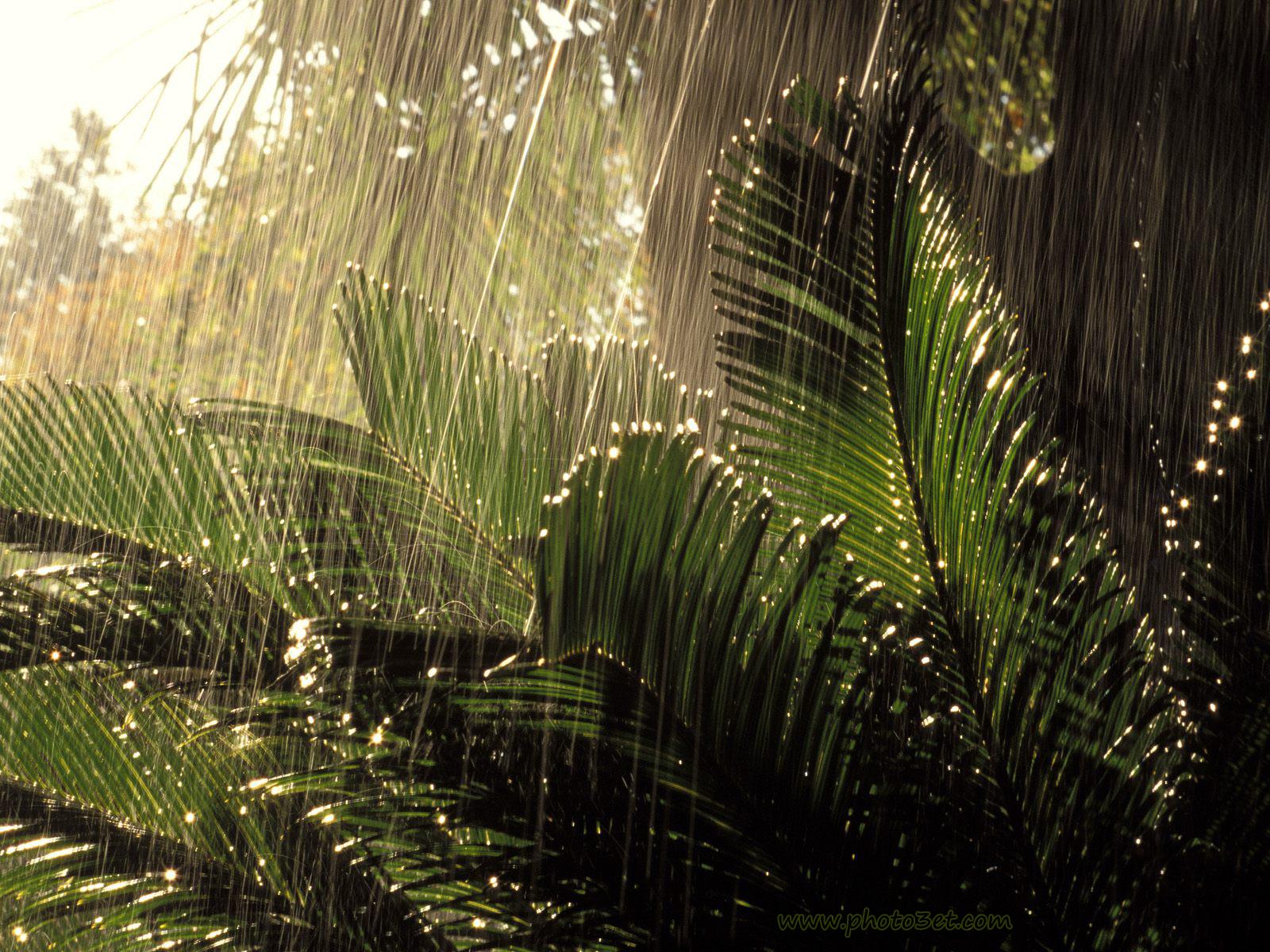 بارش باران در جنگل