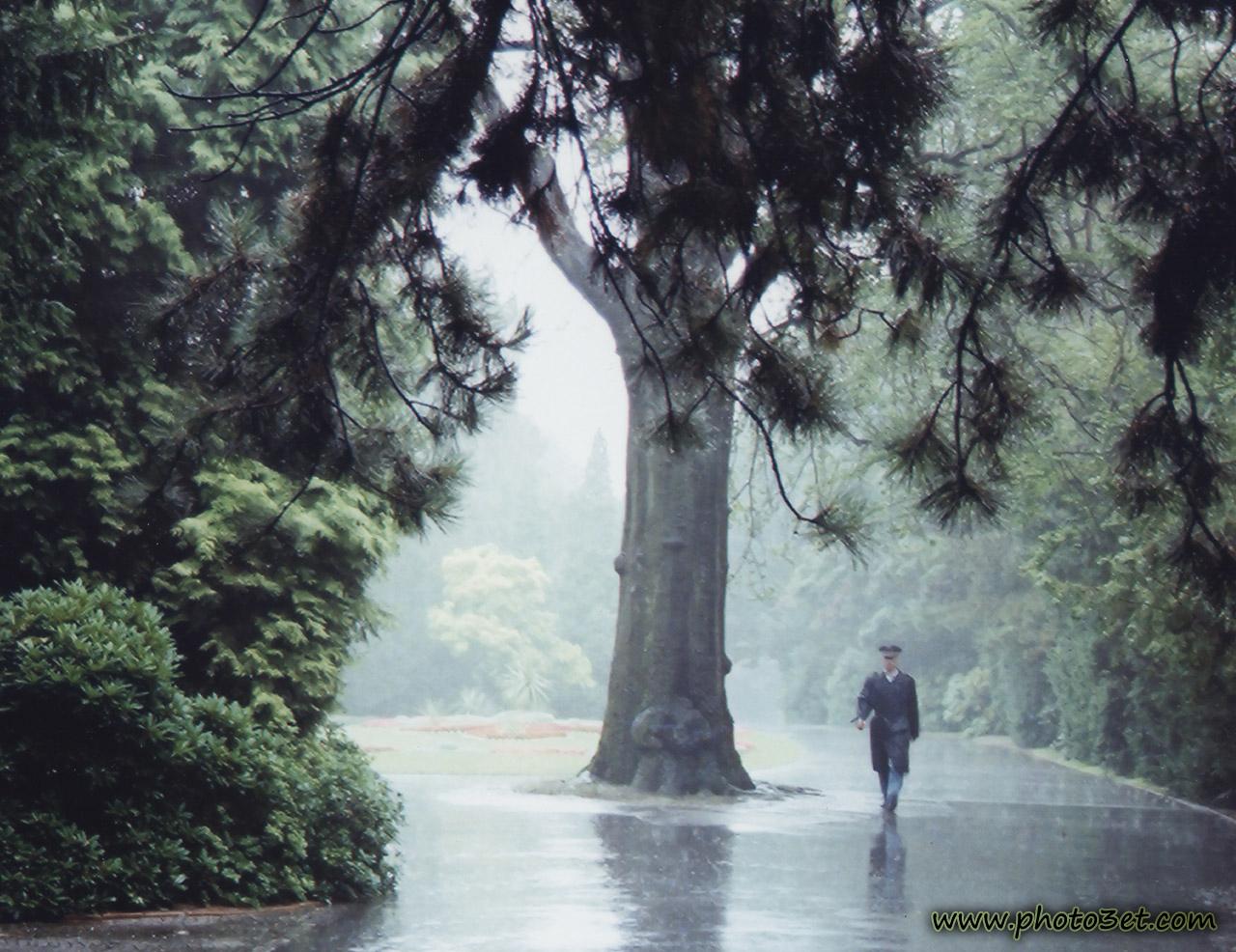 باران در جنگل