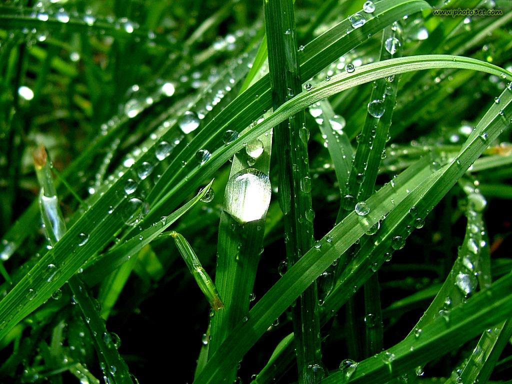 قطره و شبنم باران