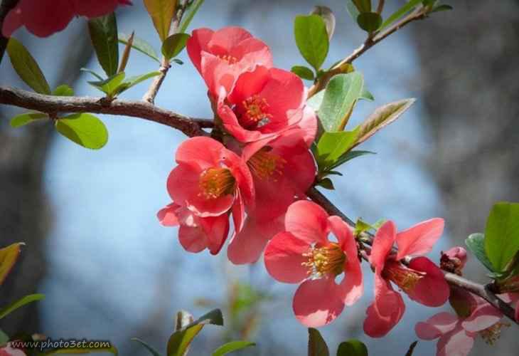 شکوفه های بهار
