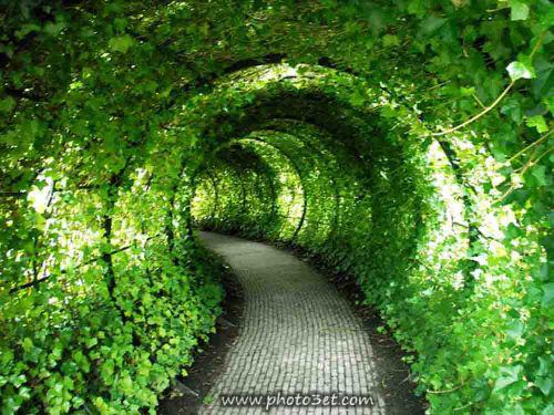 تونل سبز طلبعت