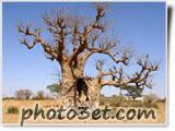 عکس درخت تنهای خشک در بیابان