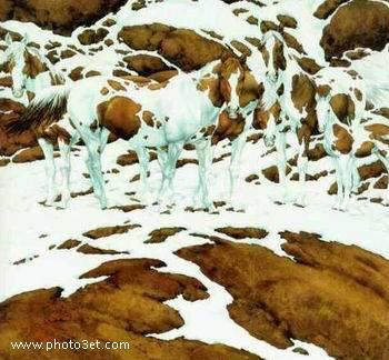 خطای چشم پیدا کردن اسب در کوهستان